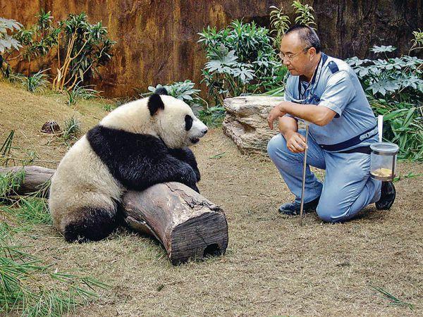 海洋公園Paul哥 最懂熊貓心 難忘教安安佳佳閉氣做體檢