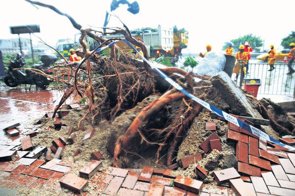 當局雨季前查樹木 減塌樹風險
