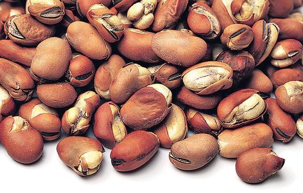 甚麼是蠶豆症?