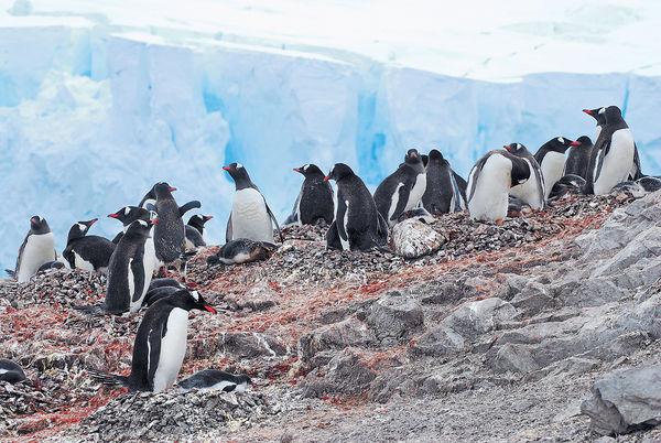 遊船闖南極 探企鵝海豹