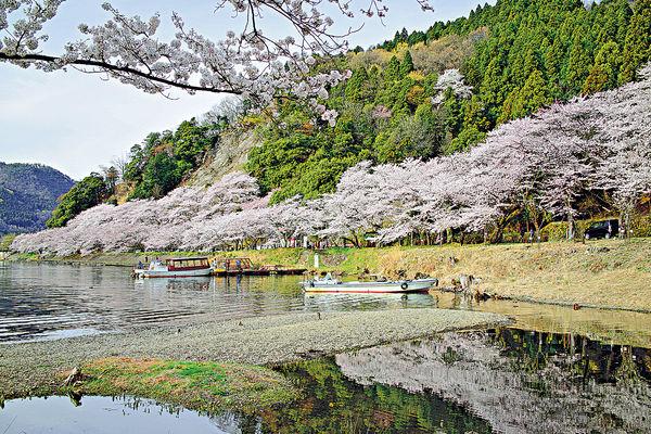 旅遊達人搞櫻花團 行程夠彈性