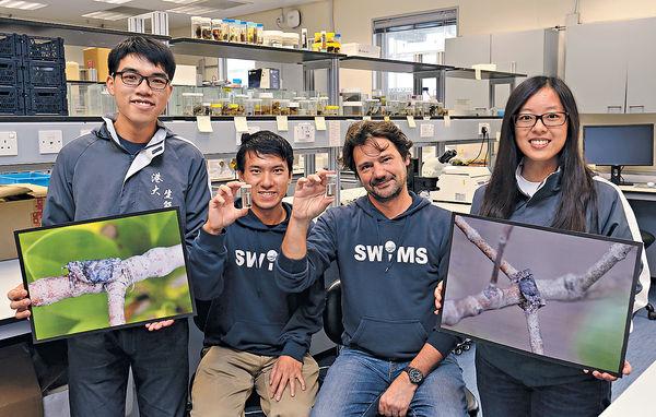 港大師生意外發現 爬樹「汀蟹」香港獨有