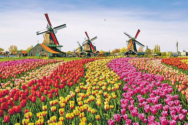 阿姆斯特丹賞花 復活節外遊新熱點