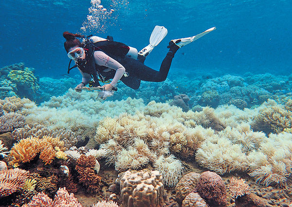 大堡礁三分二珊瑚受損