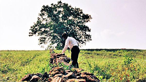 《月黑高飛》經典橡樹遭砍伐