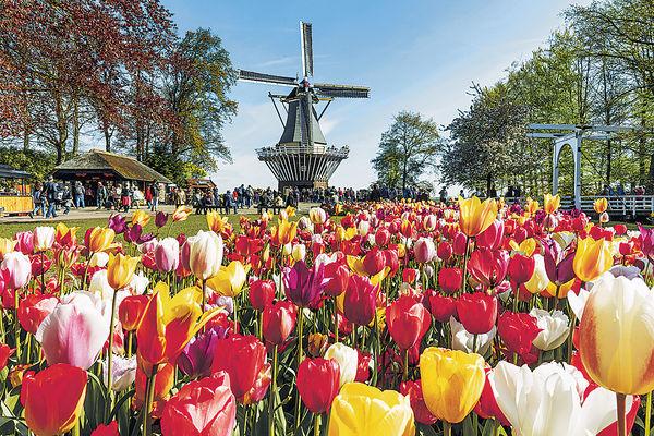 荷蘭花展視覺盛宴 700萬朵鮮花綻放