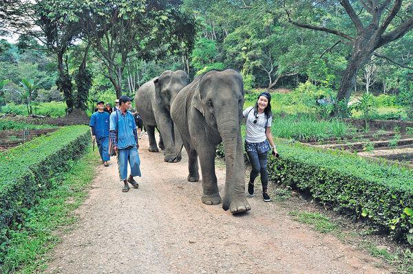 清萊與象同行 保育下快樂娛賓