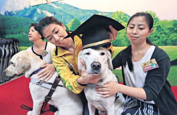 4年調教8導盲犬 首名本土訓練員感驕傲