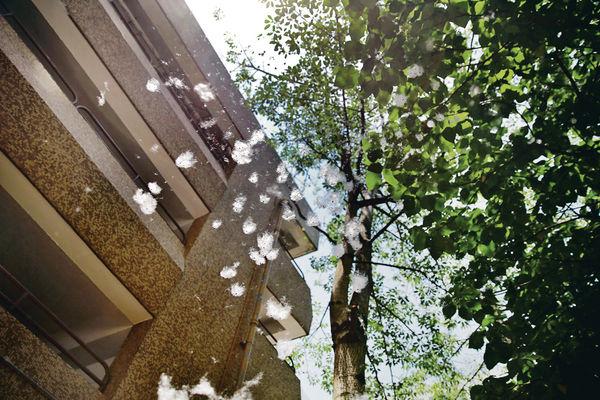 8000棵木棉樹 吹起最強「五月雪」