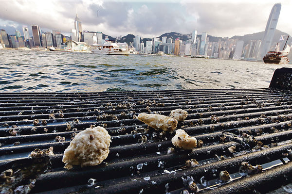 油污漂到維港 恐致海洋生態災難