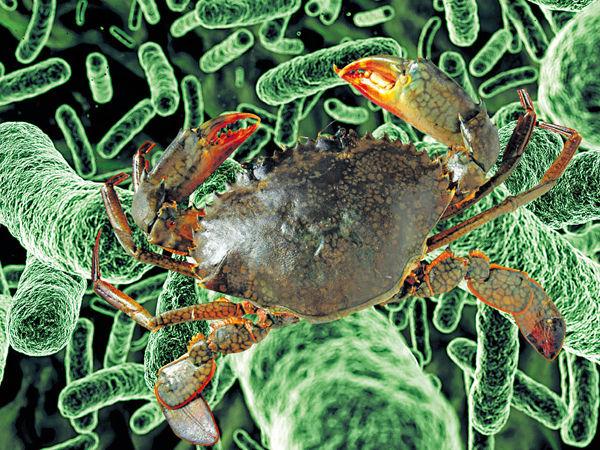 煮蟹傷手指 台婦染食肉菌喪命