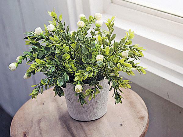 觀賞綠色植物 練腦力防失智