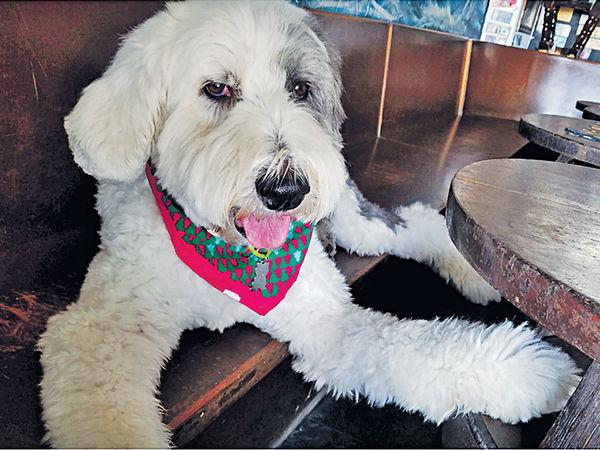 治療犬駐圖書館 助港大生減壓