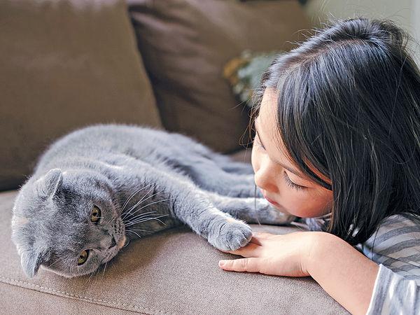 幼時養貓 助防哮喘