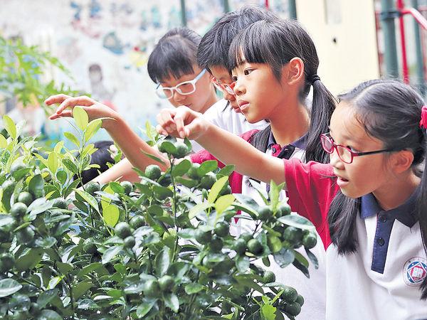 小學生STEM與蝶建情