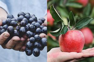 秋日7款當造水果