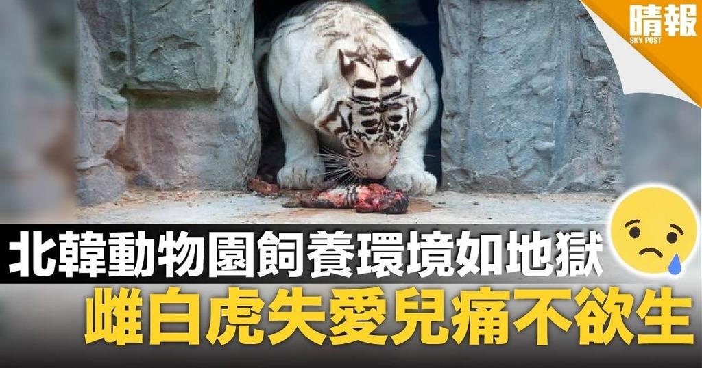 英媒揭北韓「地獄」動物園 訓練黑猩猩抽煙娛樂遊客