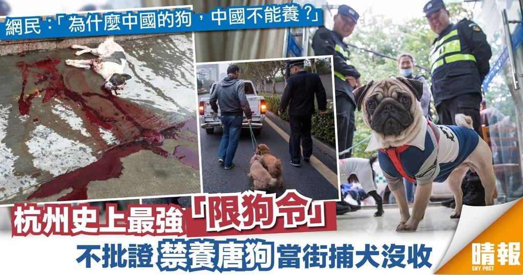 杭州史上最強「限狗令」 禁養唐狗 城管當街捉狗