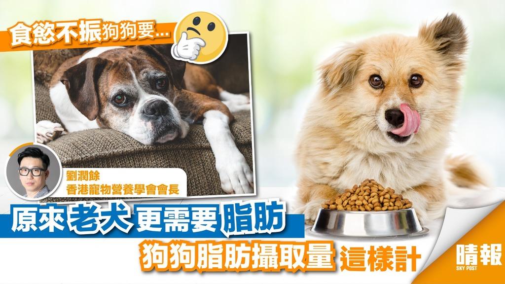 老年狗朋友更要吃脂肪?這樣計才吃得狗狗健康又快樂