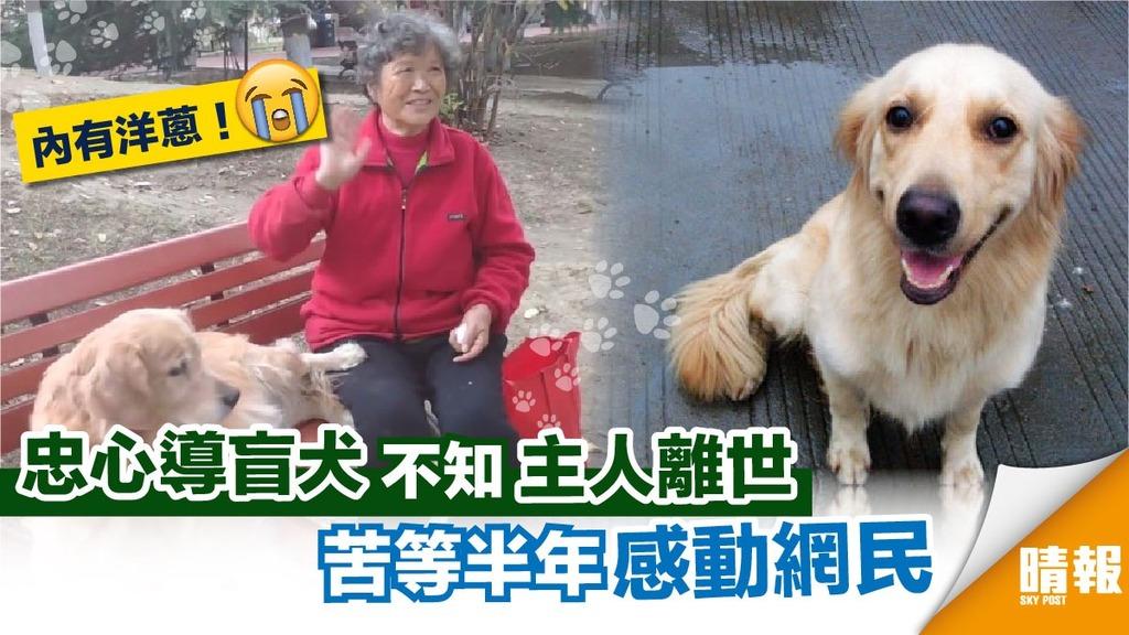 導盲犬不知主人去世 每天苦等半年