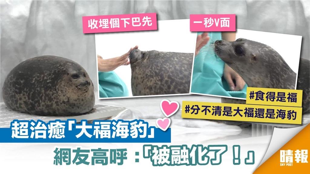 「大福海豹」萌爆網絡