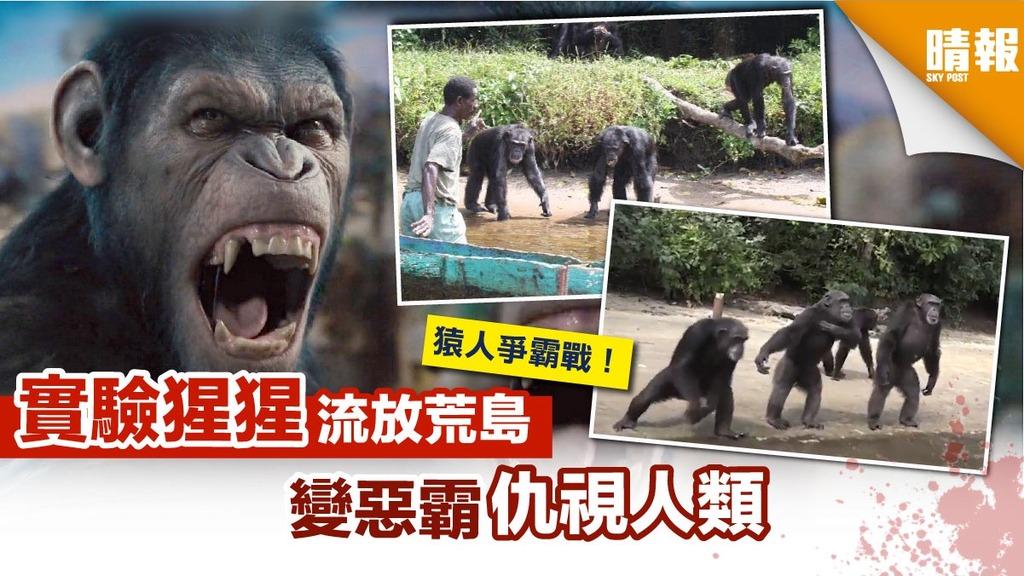 周身病痛!實驗猩猩流放荒島 成惡霸仇視人類