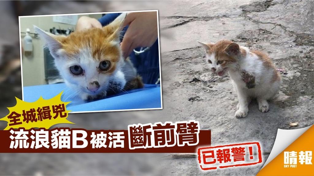 流浪貓B被活斷前臂 警:加強巡查