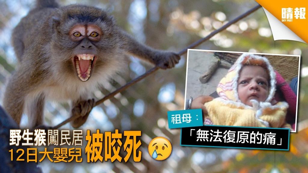 野猴闖民居 咬死12日大嬰兒