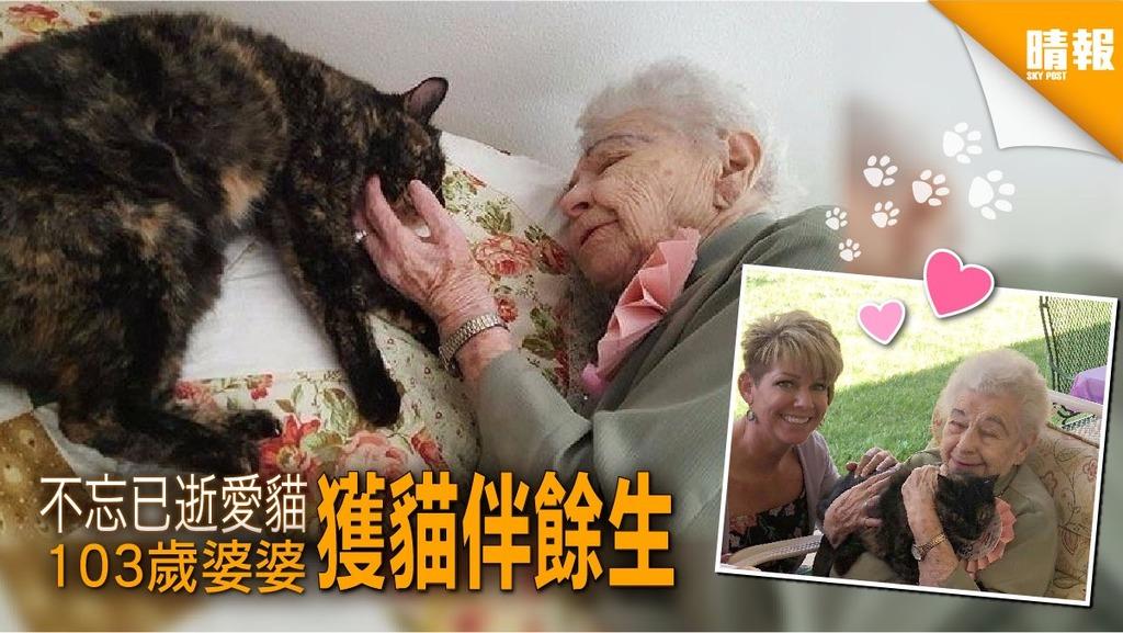 失愛貓2年 103歲婆婆生日收貓伴餘生