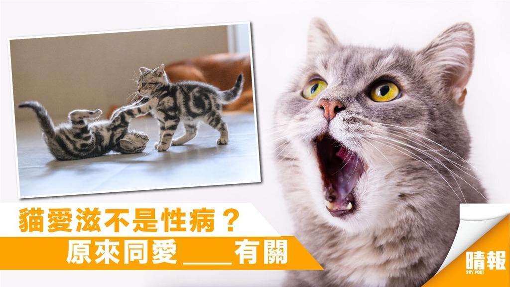 「貓愛滋」不會傳染人 更與性病無關?