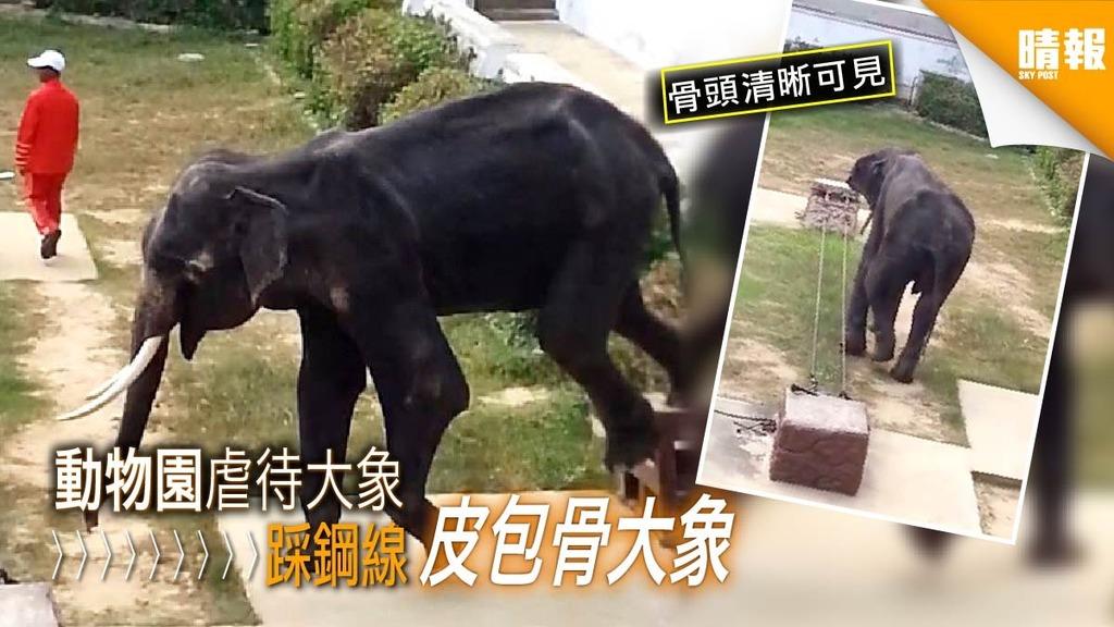 皮包骨大象瘦得像「牛」 動物園環境惡劣