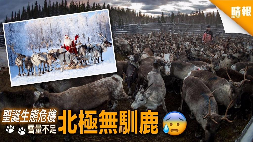 馴鹿或缺席今年「聖誕聚會」 全因氣候變化