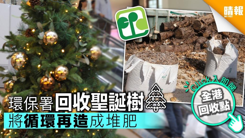 環保署下月回收天然聖誕樹 時間地點話你知