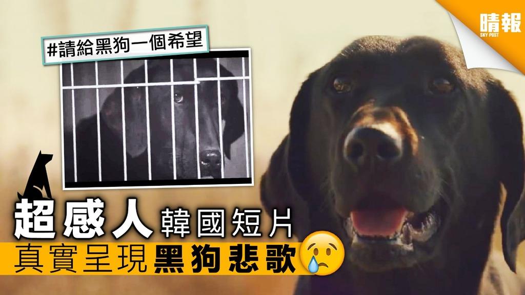 狗狗拍片「超有戲」 真實呈現黑狗悲歌