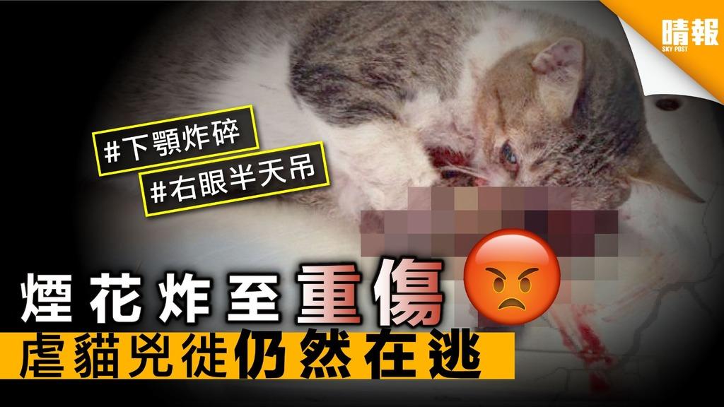煙花炸至重傷 虐貓兇徙仍然在逃