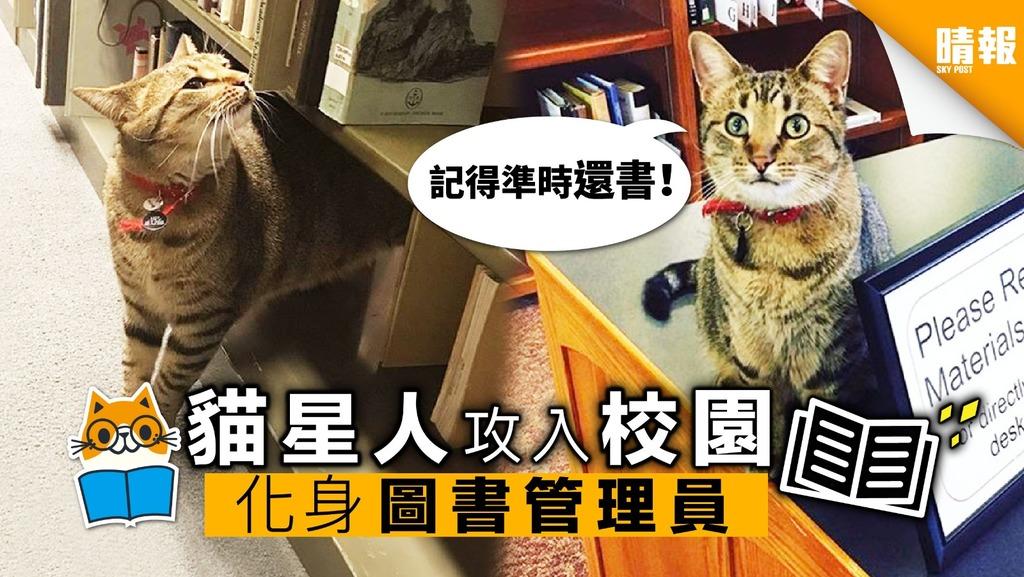 貓星人攻入校園 化身「圖書管理員」