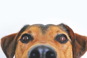 【黑眼圈】中醫教你分辨黑眼圈顏色代表什麼/3個熱敷方法去黑眼圈 鼻敏感是青色