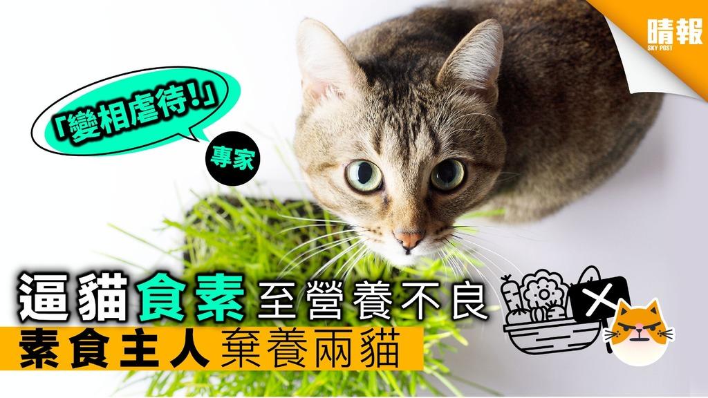 貓能不能食素?素食主人逼貓食素至營養不良