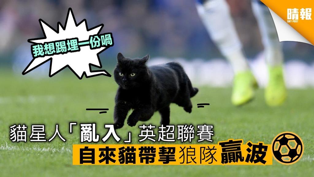 貓星人「亂入」英超聯賽 自來貓帶挈狼隊贏波