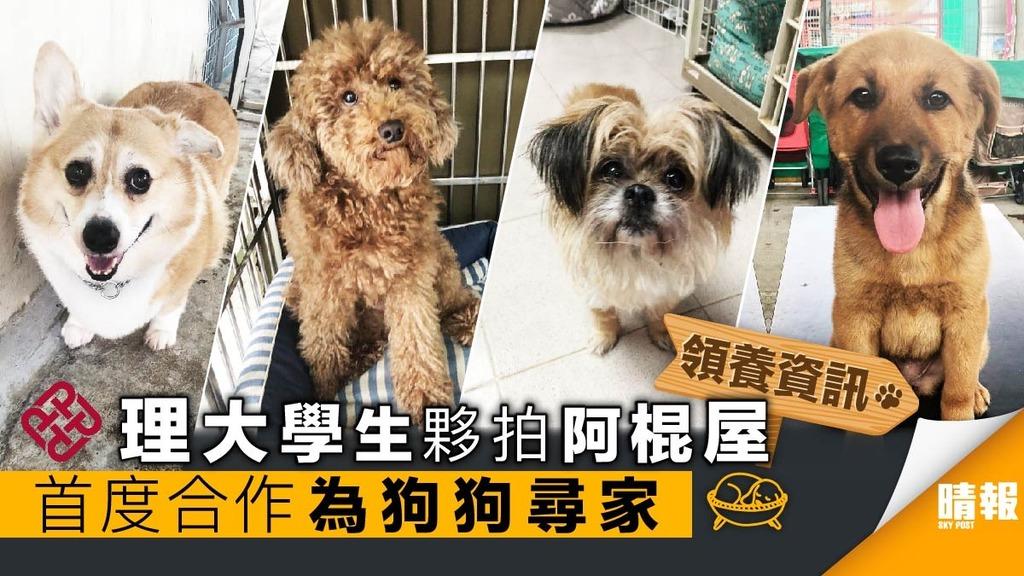 【領養日資訊】可愛狗狗等緊你 2月17日到時見!