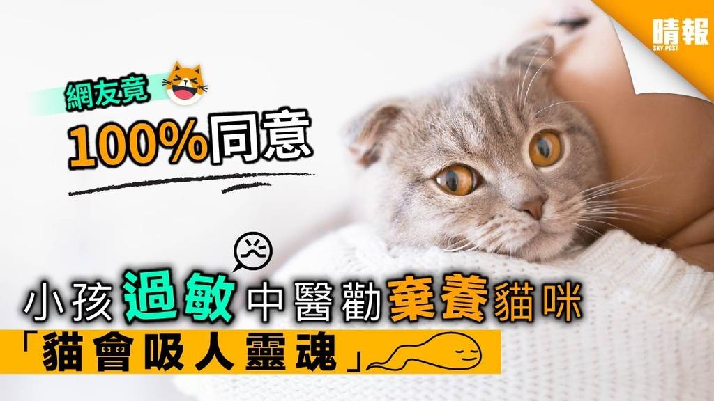 中醫勸棄養貓咪防過敏 稱「貓會吸人靈魂」 網友笑翻大表同意