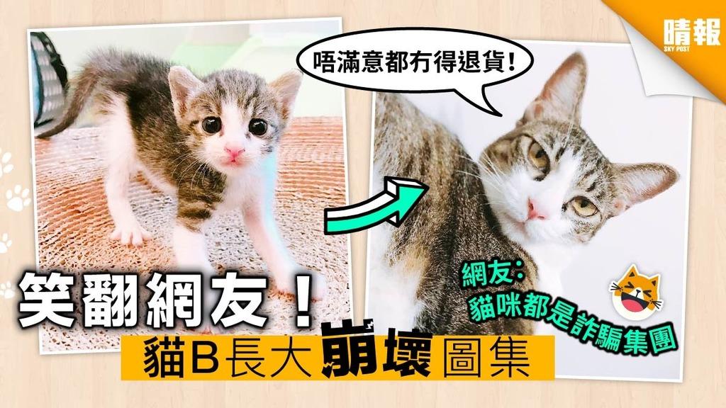 貓B長大崩壞對比照圖集 網友:勿因可愛而養
