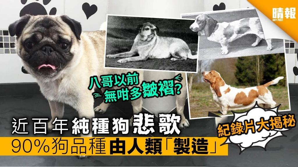 純種狗悲歌 90%狗品種由人類近百年「製造」