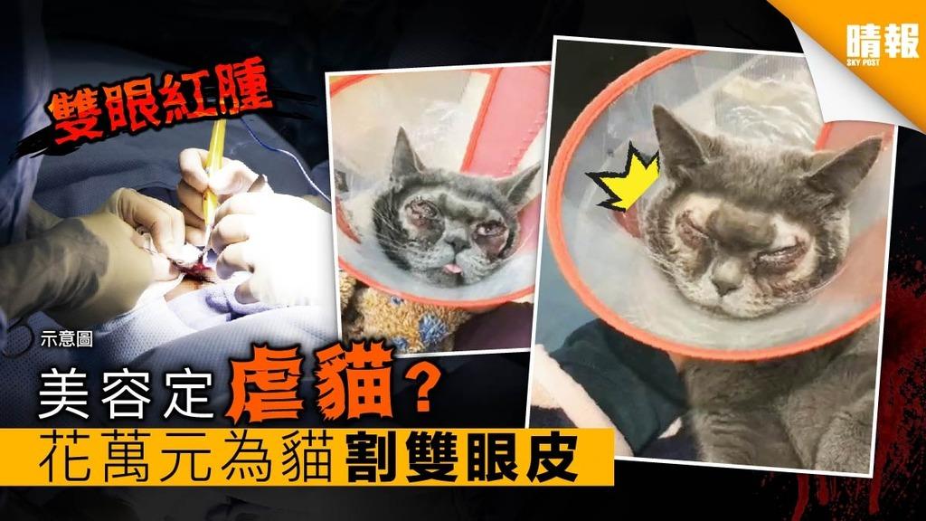 美容定虐貓? 花萬元為貓割雙眼皮