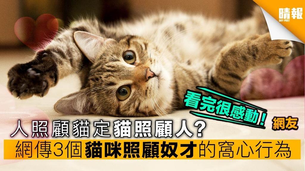 其實貓咪在照顧你?網傳3個貓咪照顧奴才的窩心行為