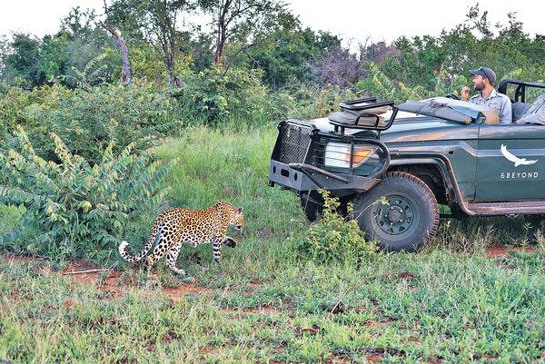 南非國家公園 零距離接觸猛獸