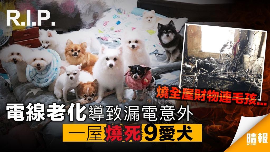 主人哭訴!火災一屋燒死9愛犬 電線老化導致漏電意外