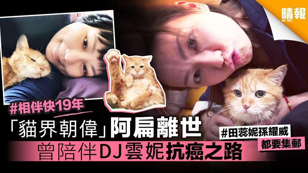 「貓界朝偉」阿扁離世 曾陪伴DJ雲妮抗癌之路
