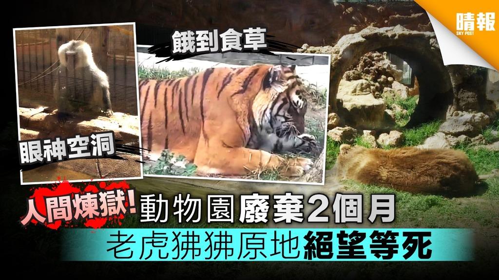 人間煉獄!動物園廢棄2個月 老虎狒狒原地絕望等死
