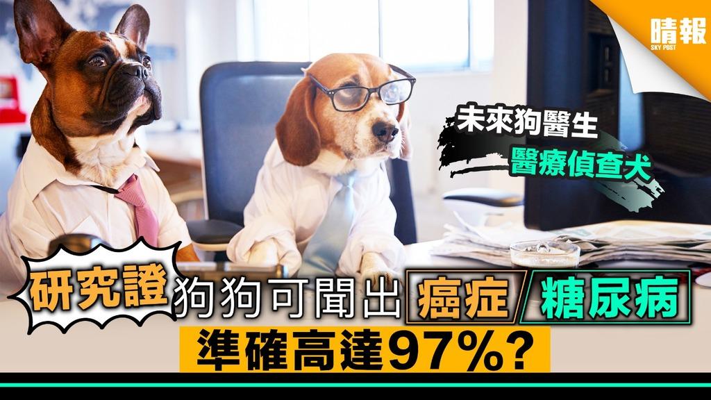 研究證狗可聞出肺癌﹑糖尿 準確率高達97%